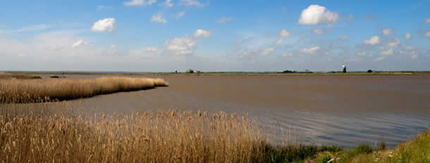 The Waverny estuary and reedbeds